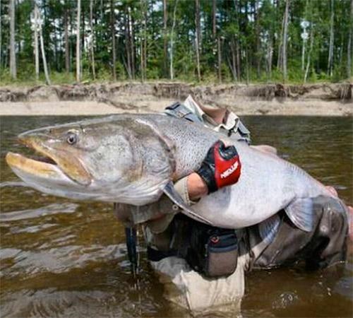 Мужские шаблоны для фотошопа: Рыба монстр