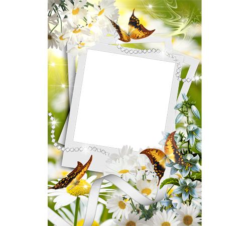 Рамки с цветами для фотошопа: Ромашки и бабочки