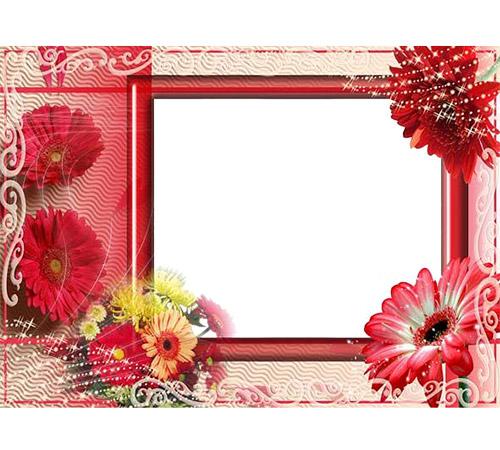 Рамки с цветами для фотошопа: Герберы