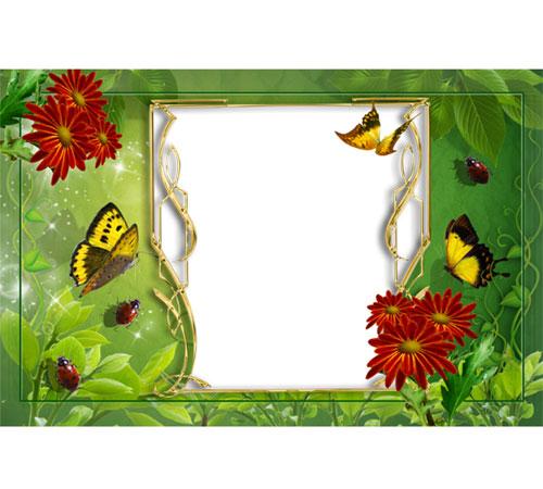 Рамки с цветами для фотошопа: Бабочки и герберы