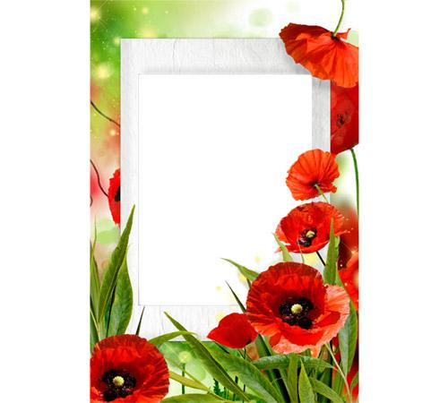 Рамки с цветами для фотошопа: Алые маки