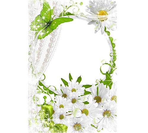 Рамки с цветами для фотошопа: Белые ромашки
