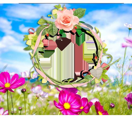 Рамки с цветами для фотошопа: Полевые цветы