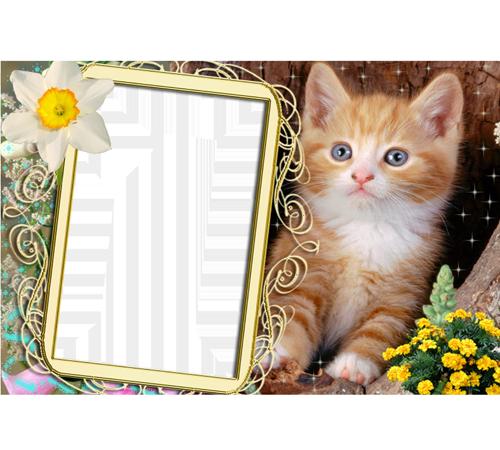 Женские рамки для фотошопа: Милый котик