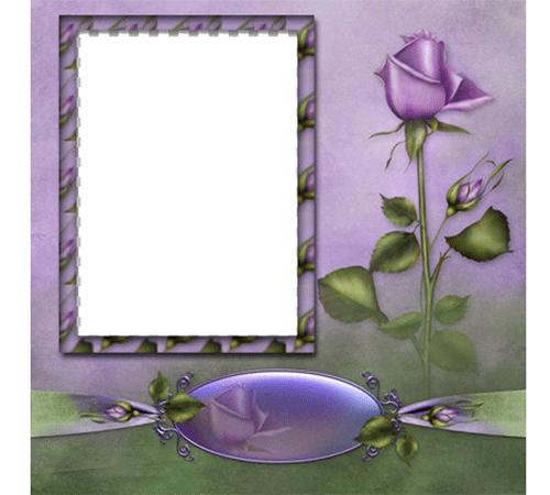 Рамки с цветами для фотошопа: Роза печали
