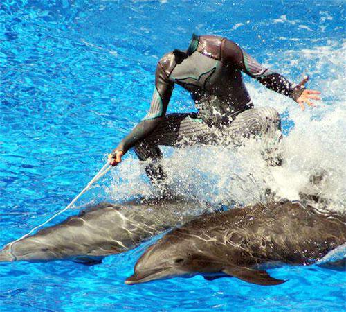 Приколы фотошопа для мужчин: Верхом на дельфинах