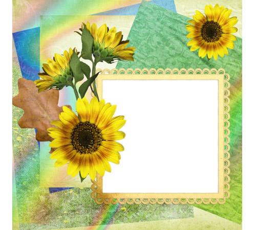 Рамки с цветами для фотошопа: Цвет подсолнуха
