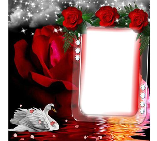 Женские рамки для фотошопа: Роза и лебедь